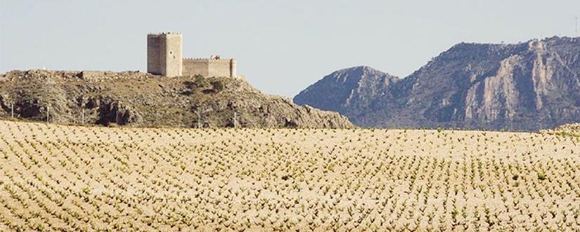 Bodegas Alceño • Wein kaufen