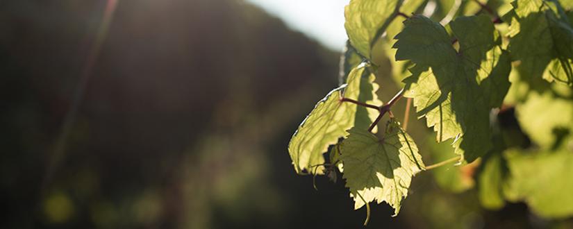 Cantina Ruvo di Puglia • Wein kaufen
