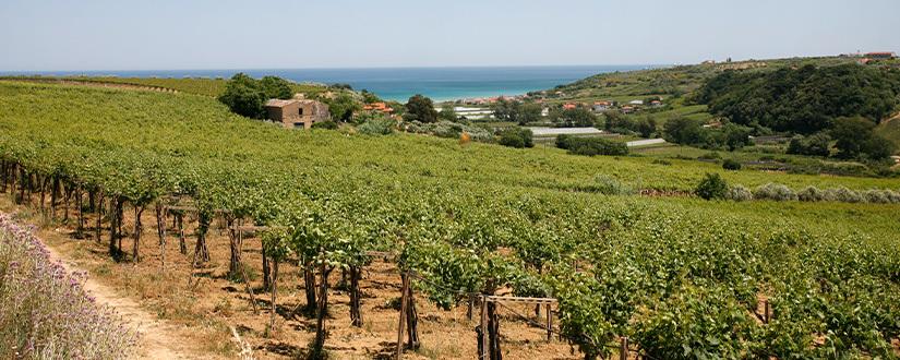 Cantina Tollo • Wein kaufen