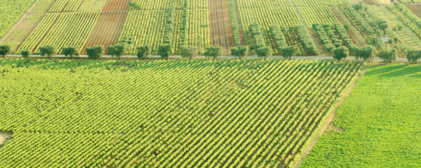 Cantine Due Palme • Wein kaufen
