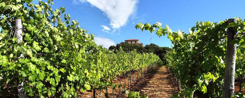 Cantine Lento • Wein kaufen