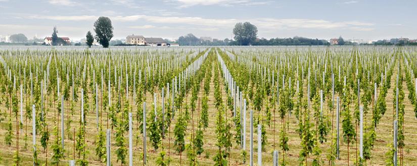 Casa Vinicola Botter • Wein kaufen