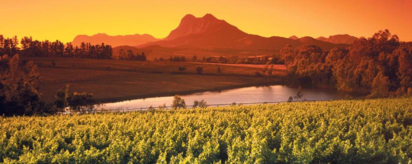 Weingut Cederberg • Wein kaufen