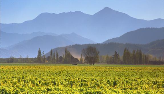 Weingut Cloudy Bay • Wein kaufen