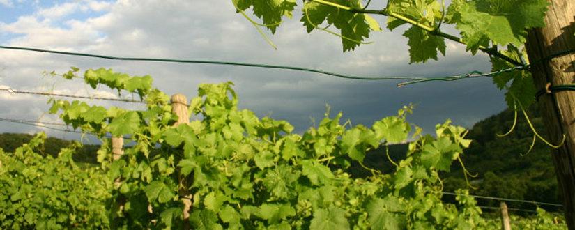 Weingut De Ladoucette • Wein kaufen