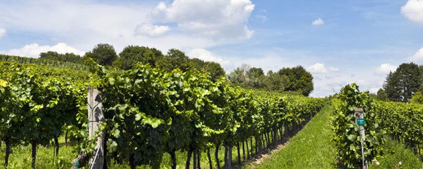 Weingut Disznokö • Wein kaufen