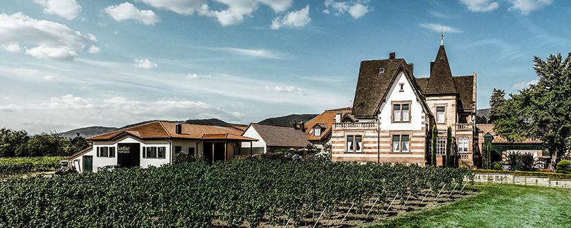 Weingut Faubel • Wein kaufen