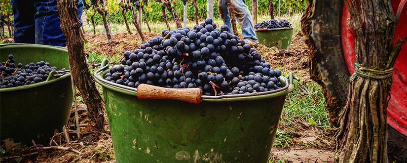 Weingut Freitag – Saulheim • Wein kaufen