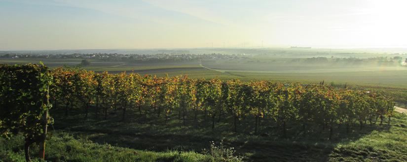 Weingut Göhring • Wein kaufen