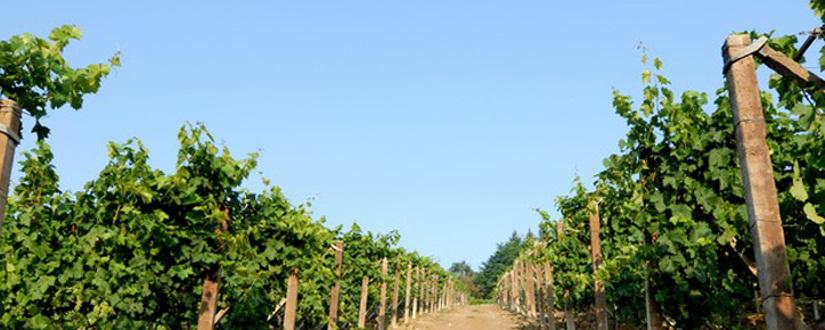 Golan Heights Winery • Wein kaufen
