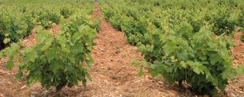 Hacienda Villarta • Wein kaufen