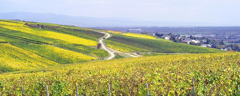Weingut Clemens Honrath • Wein kaufen