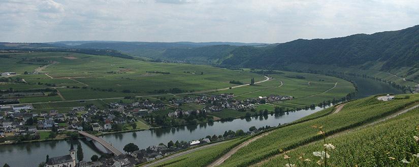 Weingut Josef Reuscher Erben • Wein kaufen