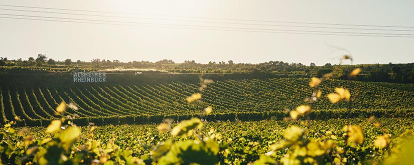 Weingut Juliane Eller • Wein kaufen