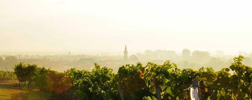 Weingut Knipser • Wein kaufen
