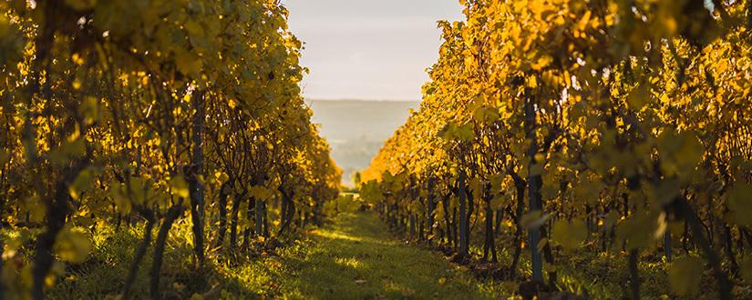 Weingut Lamm-Jung • Wein kaufen