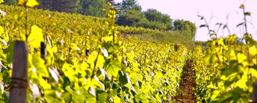 Champagne Laurent Perrier • Wein kaufen