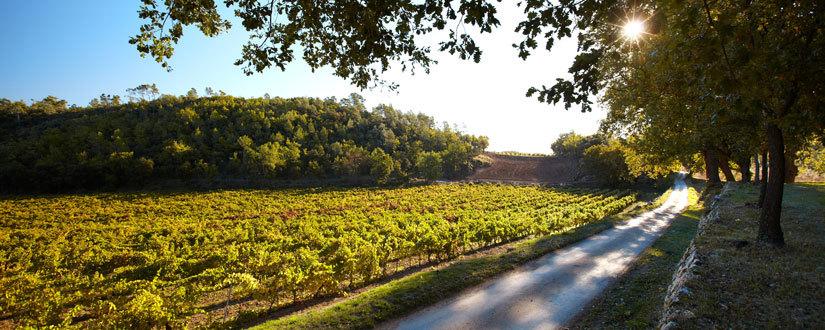 Weingut Miraval • Wein kaufen