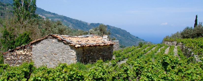Weingut Tsantalis • Wein kaufen