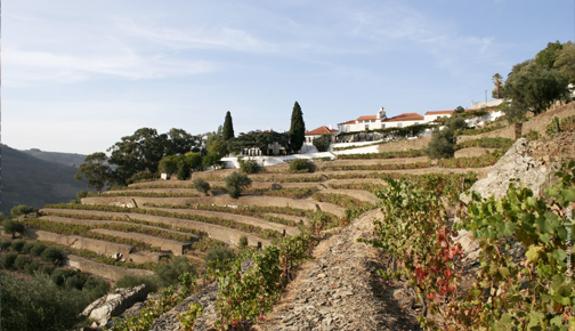 Weingut Quinta do Noval • Wein kaufen