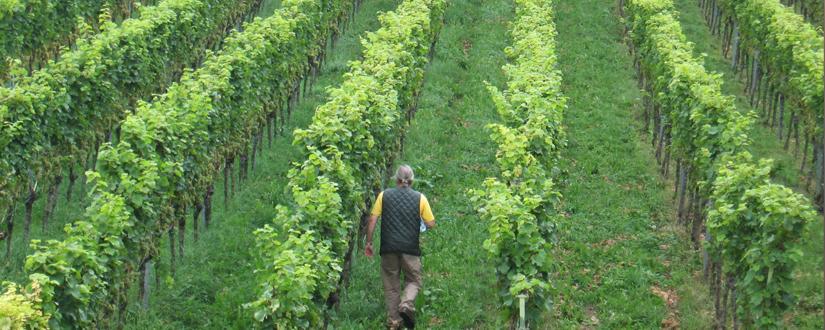 Weingut Seeger • Wein kaufen