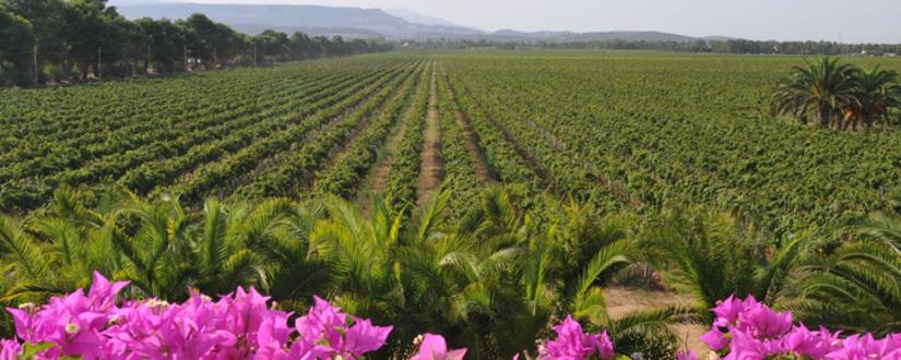 Weingut Sella & Mosca • Wein kaufen