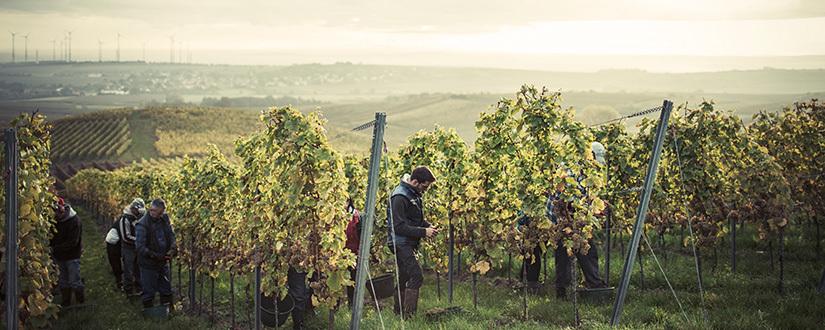 Weingut Winter • Wein kaufen
